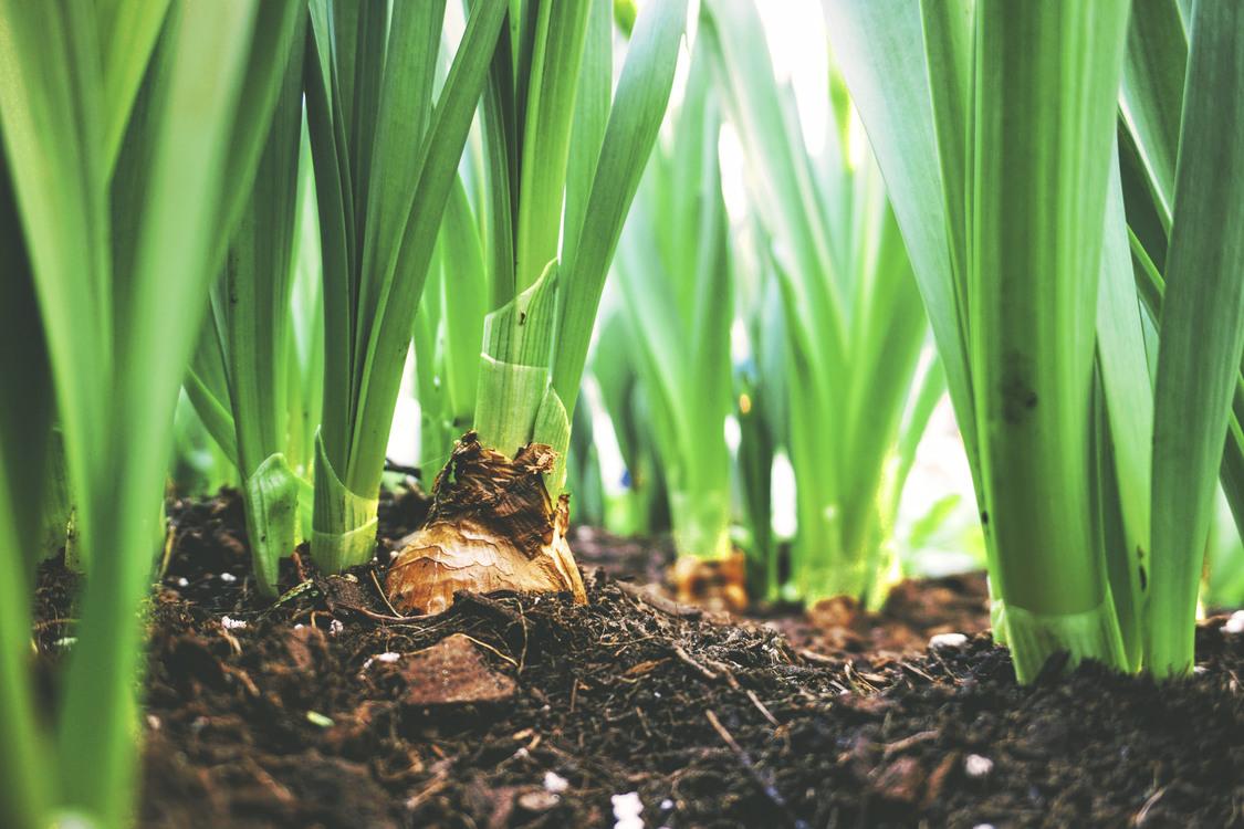 Plant,Commodity,Tree