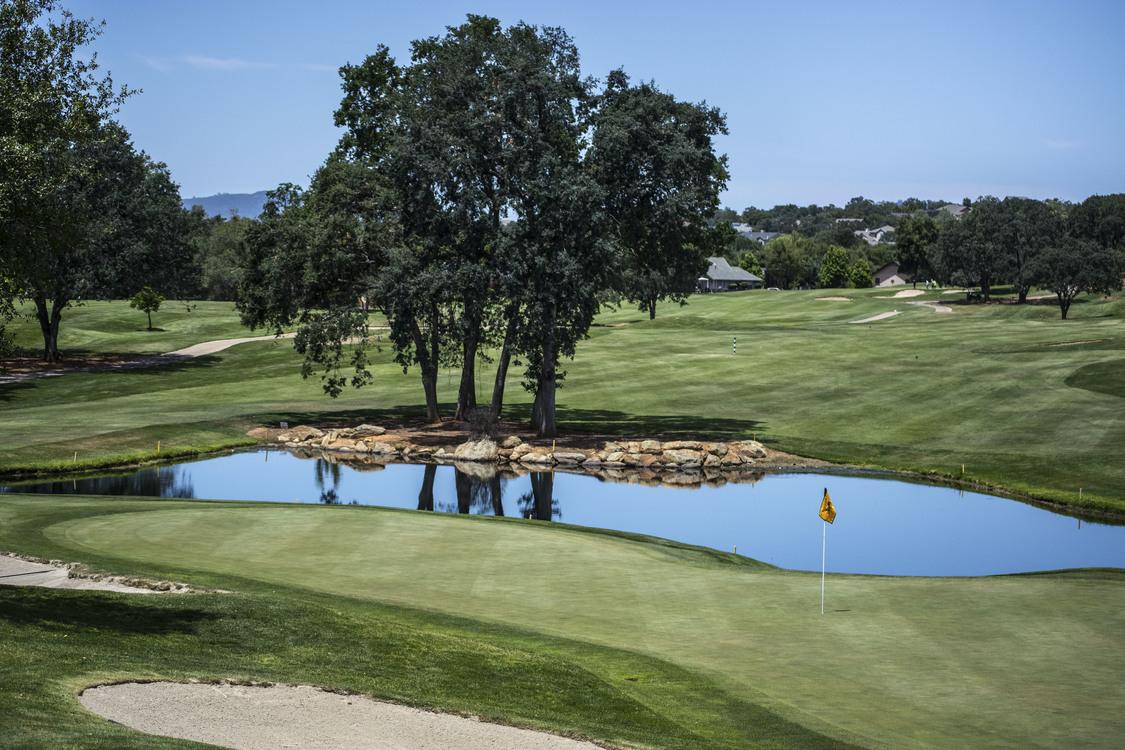 Golf Club,Estate,Tree