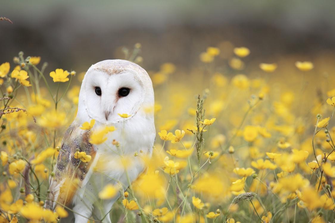 Computer Wallpaper,Owl,Wildlife