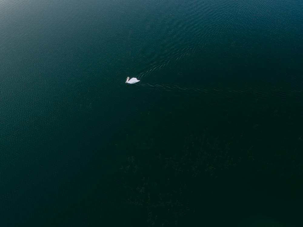 Underwater,Atmosphere,Marine Biology