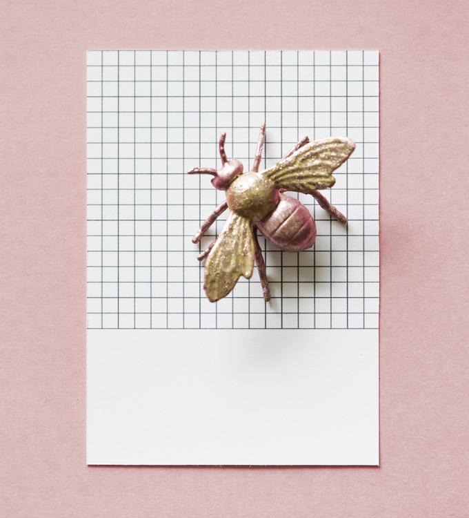 Pollinator,Invertebrate,Arthropod