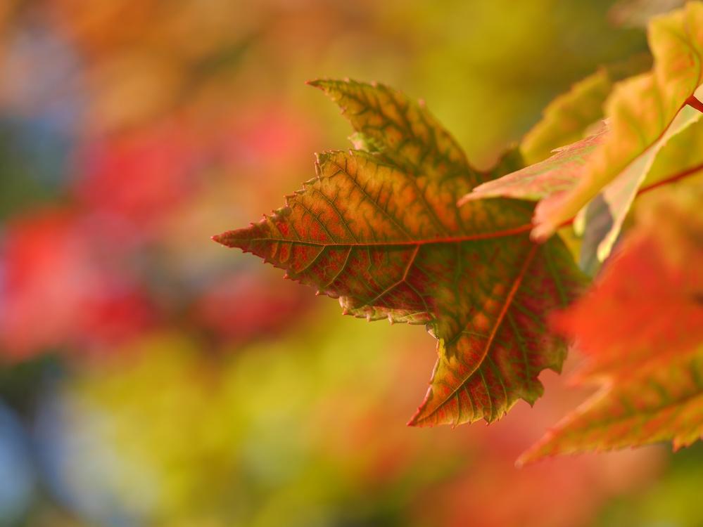Close Up,Leaf,Tree