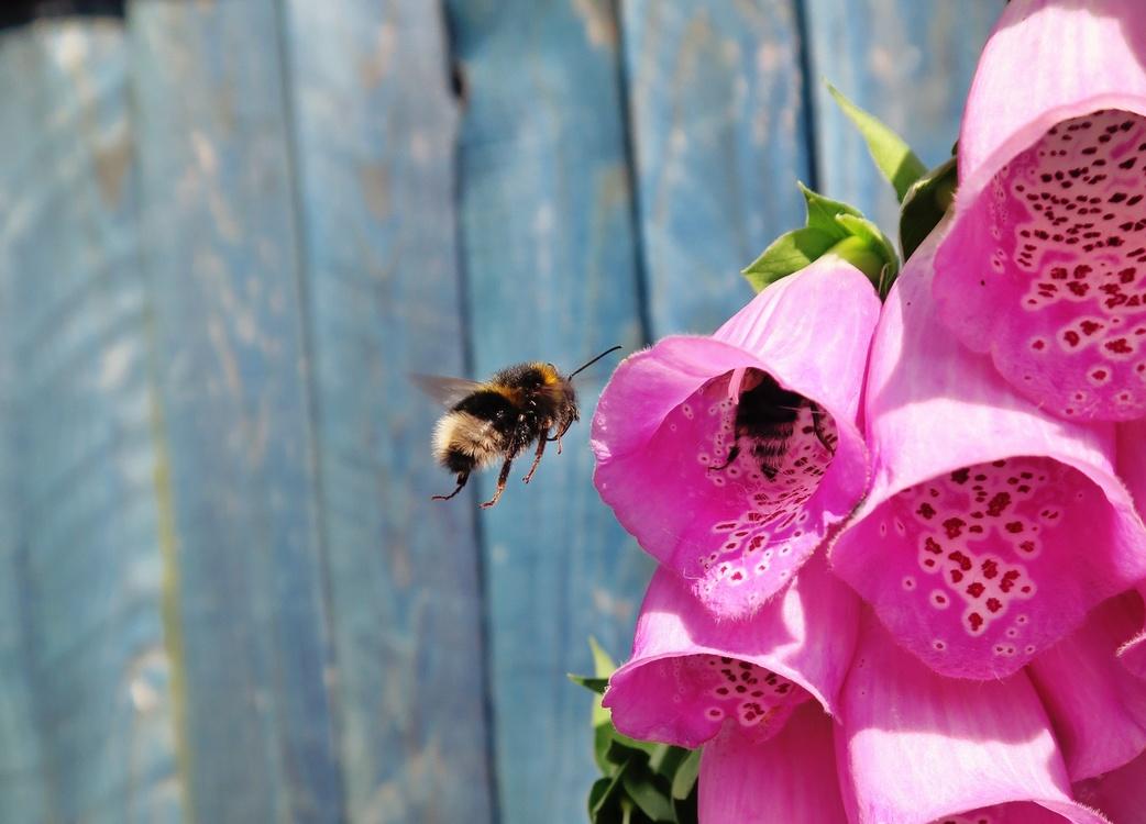 Pink,Pollen,Flora