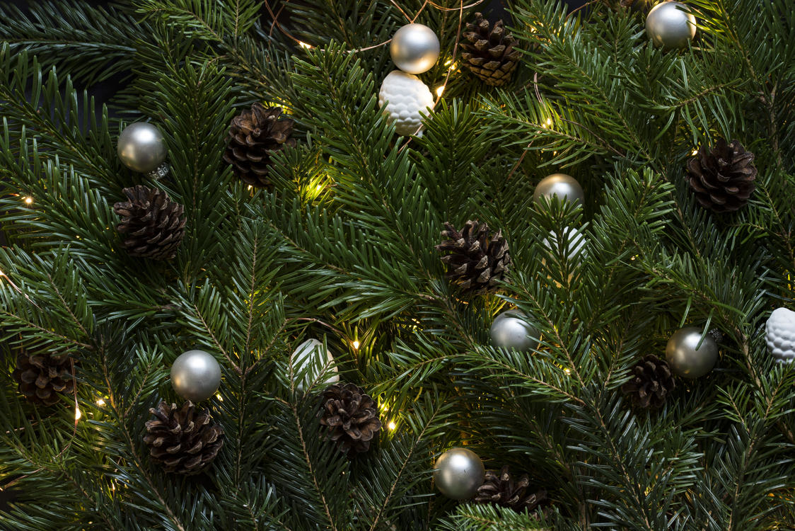 Evergreen,Pine Family,Christmas Decoration
