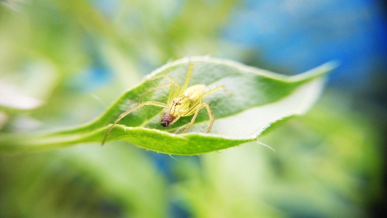 Pollen,Wildlife,Close Up