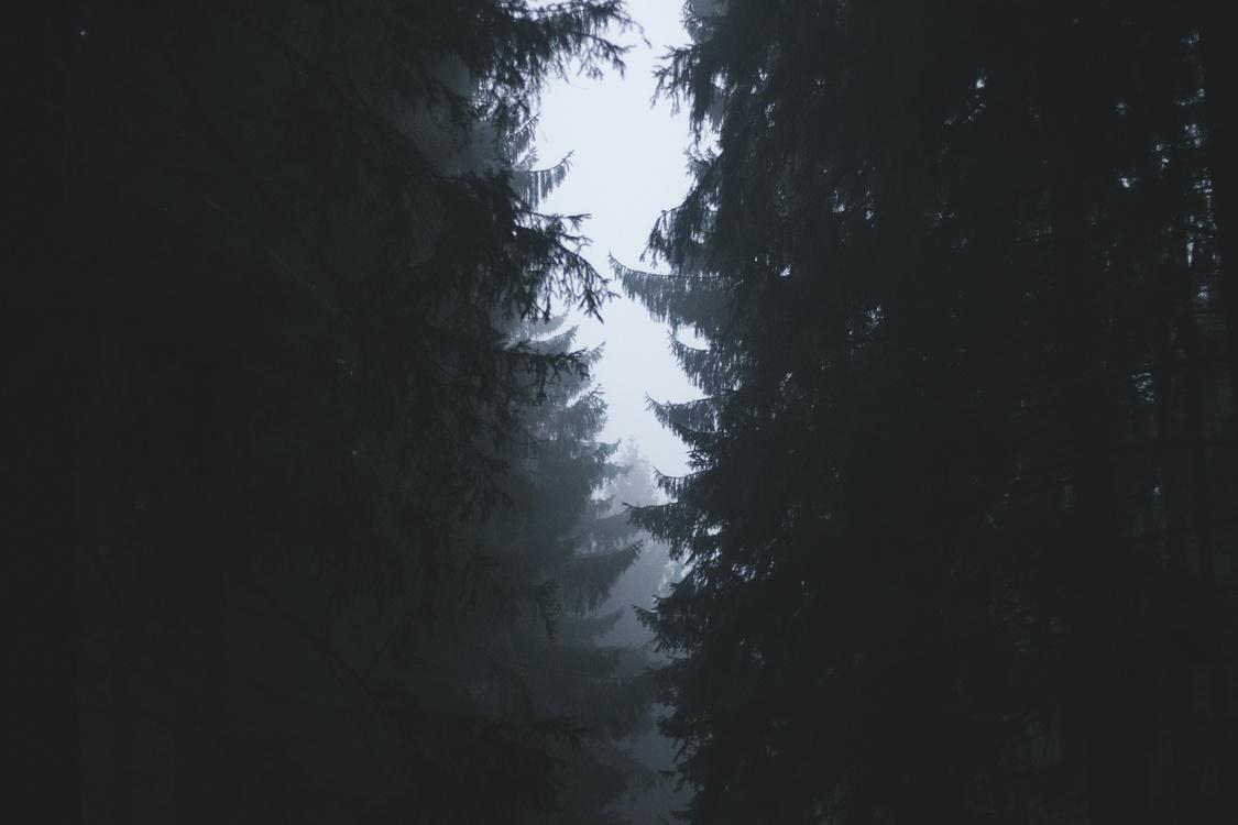 Tree,Atmosphere,Darkness