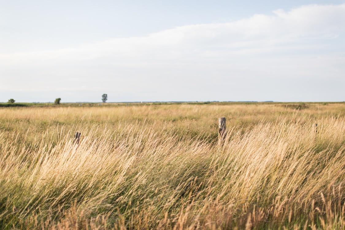 Grass Family,Meadow,Ecosystem