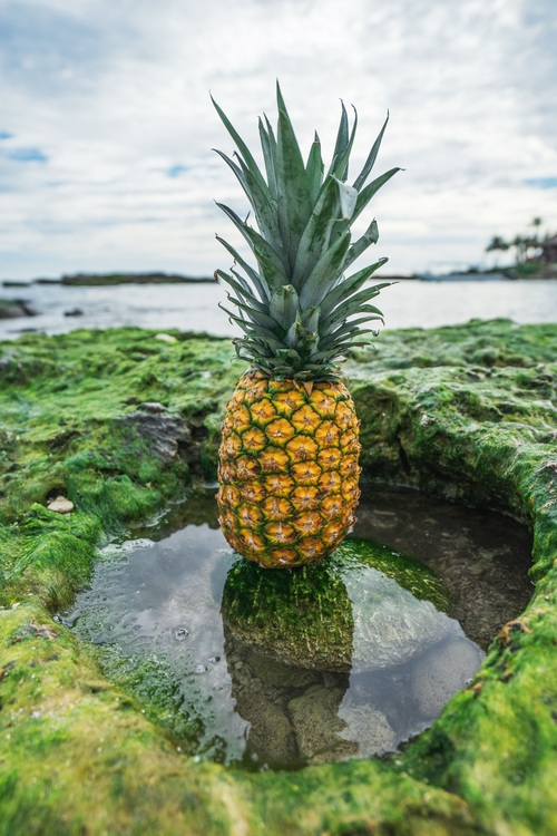 Plant,Ananas,Tree