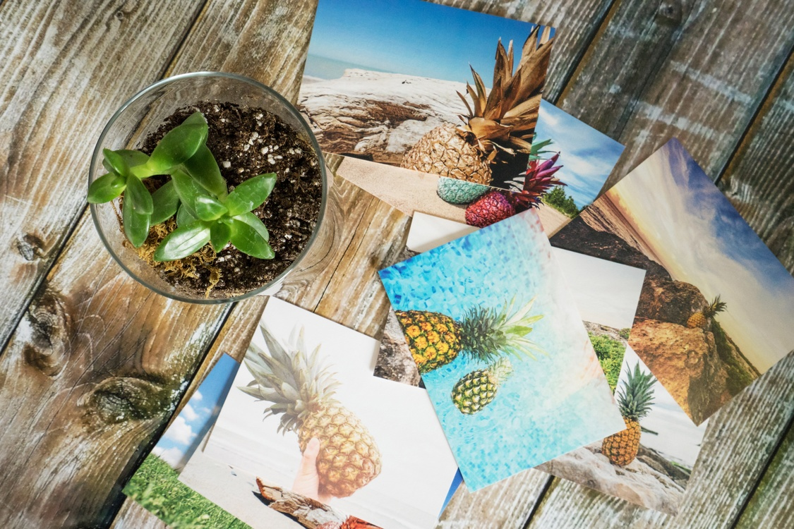 Plant,Pineapple,Photography