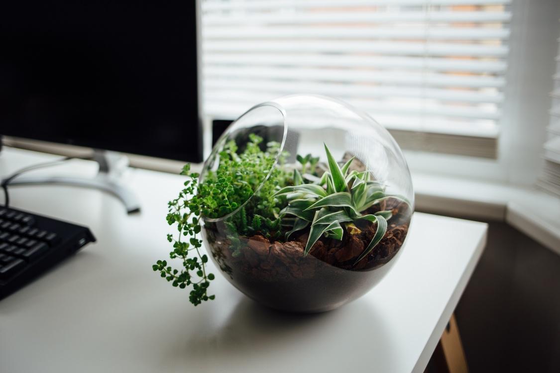 Herb,Plant,Flowerpot