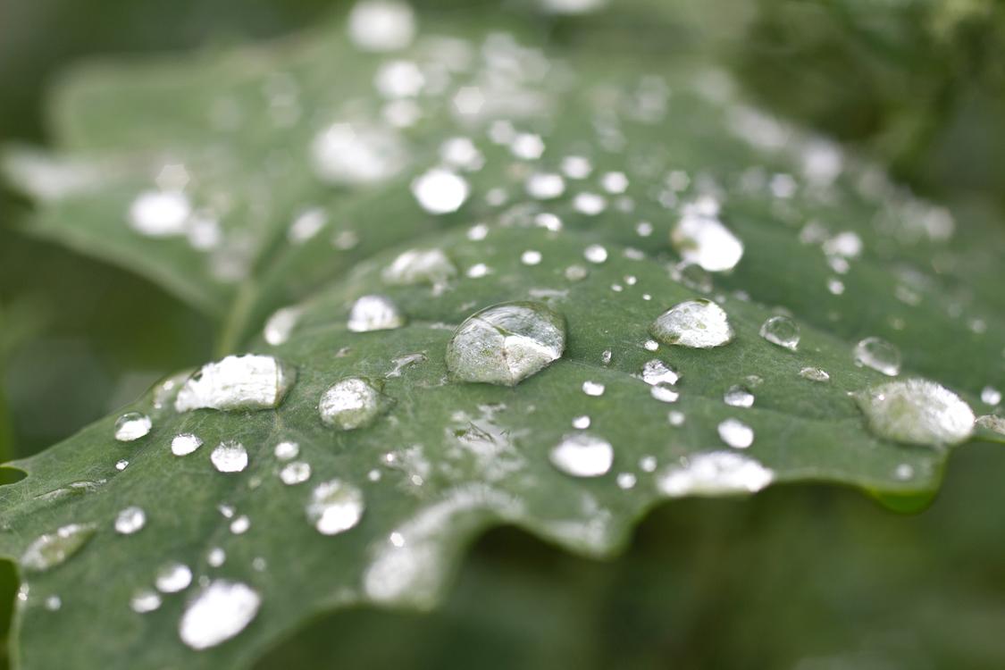 Close Up,Leaf,Drop