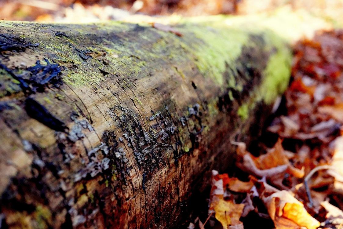 Tree,Trunk,Leaf