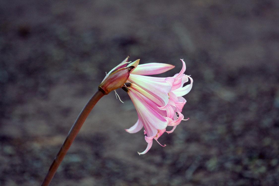 Plant,Flora,Macro Photography