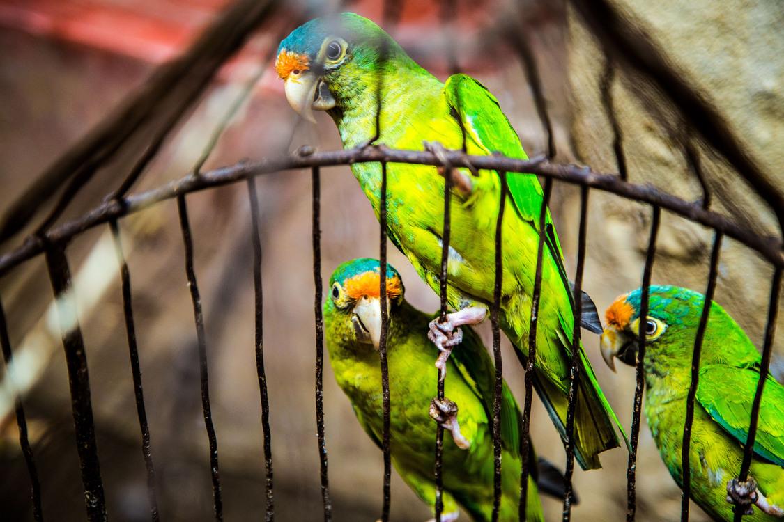 Wildlife,Macaw,Parrot