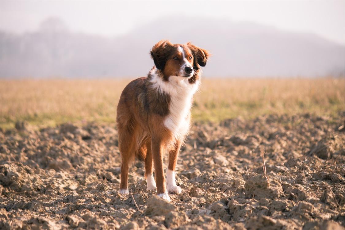 Companion Dog,Sky,Dog