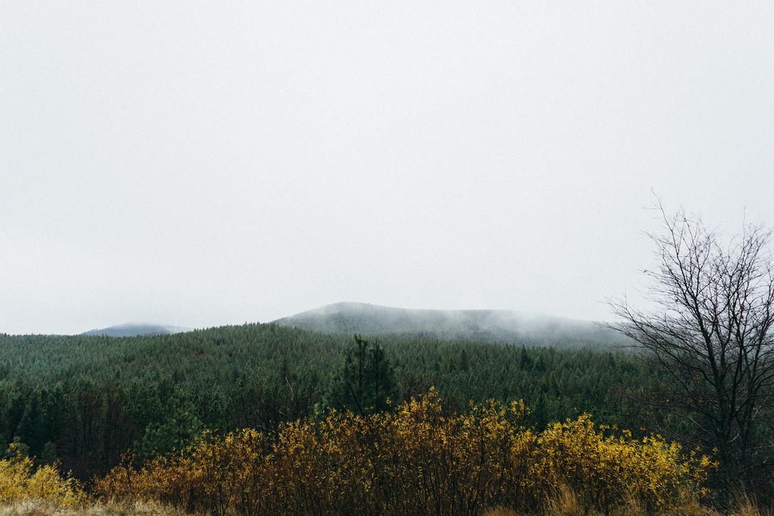 Meadow,Shrubland,Landscape