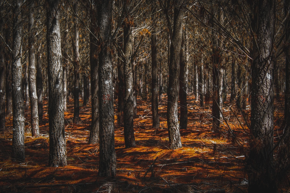 Northern Hardwood Forest Concept,Temperate Broadleaf And Mixed Forest,Trunk