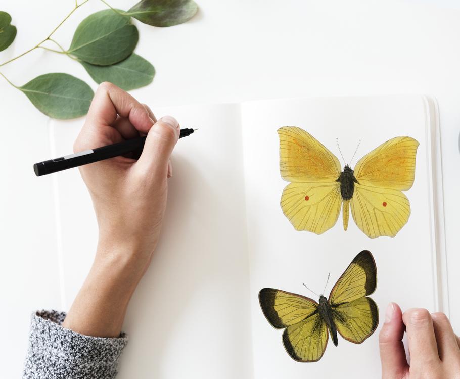 Butterfly,Pollinator,Monarch Butterfly