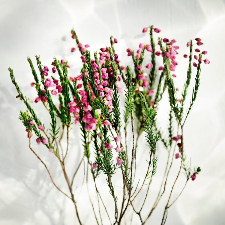 Floral design Flower Cherry blossom Leaf