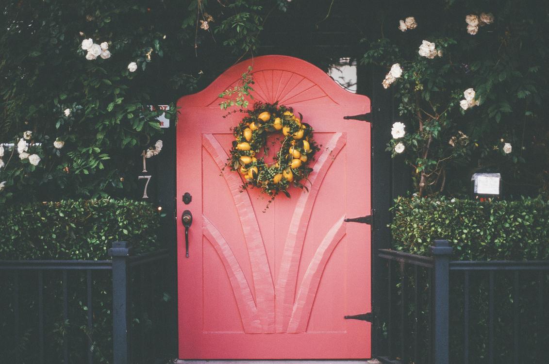 Pink,Lighting,Flower