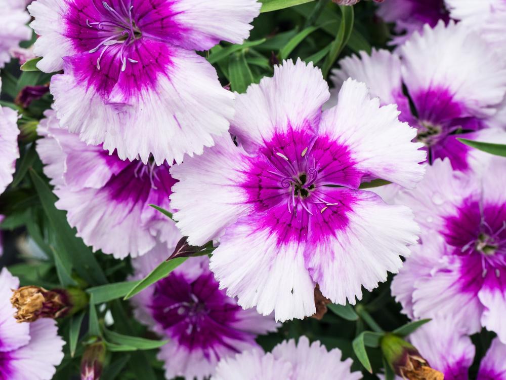 Pink Purple Digital Cameras Flower Color