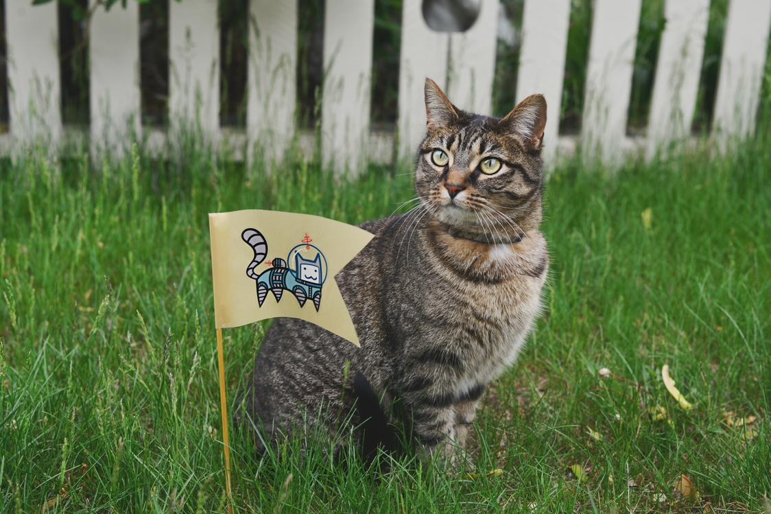 Domestic Short Haired Cat,Snout,Grass Family