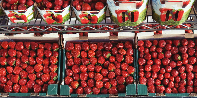 Tomato,Chili Pepper,Marketplace