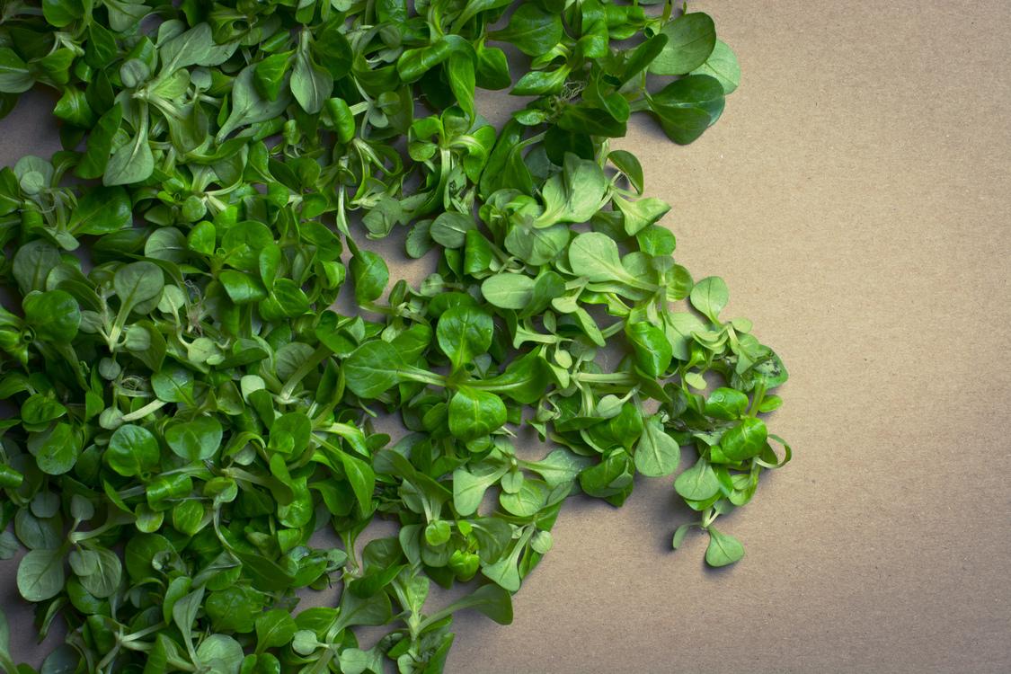 Herb,Plant,Grass