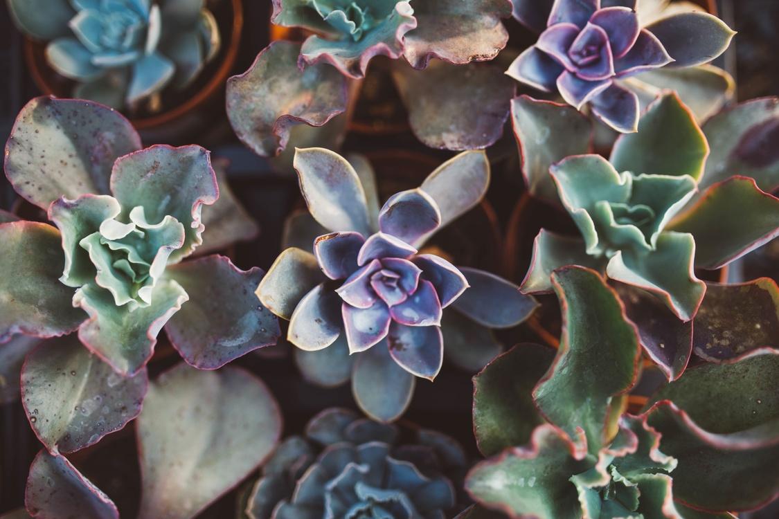 Plant,Flora,Flower
