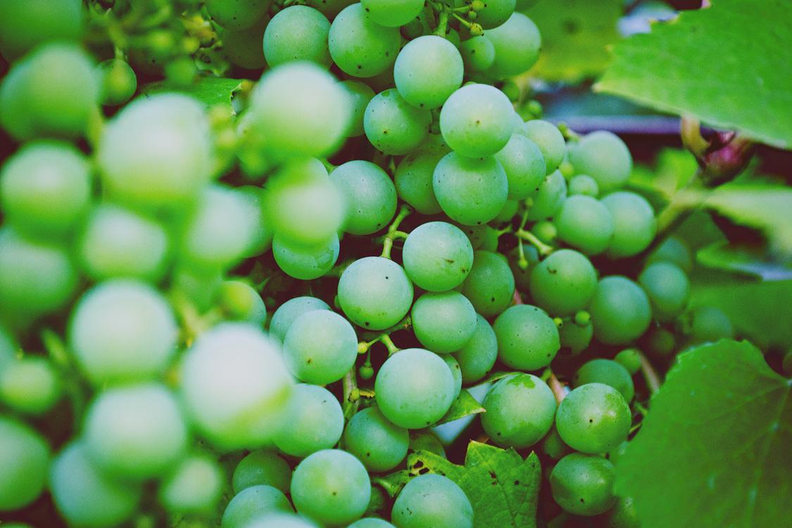 Seedless Fruit,Coccoloba Uvifera,Plant