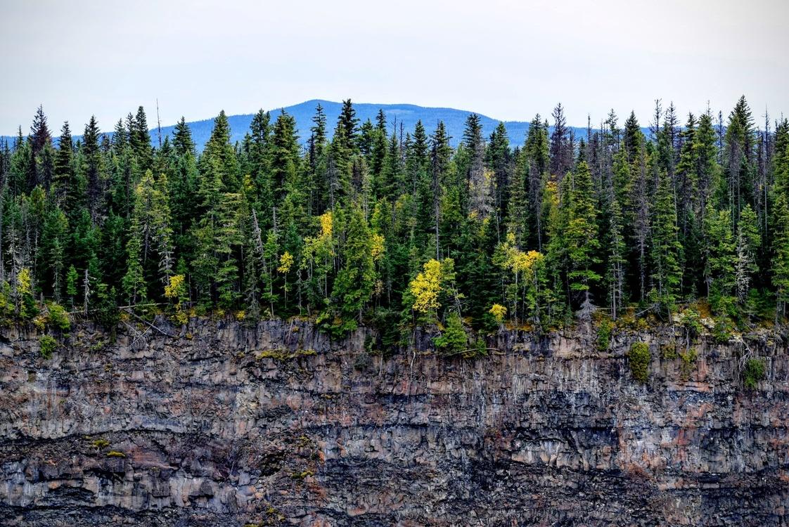 Mountain,Wilderness,Conifer