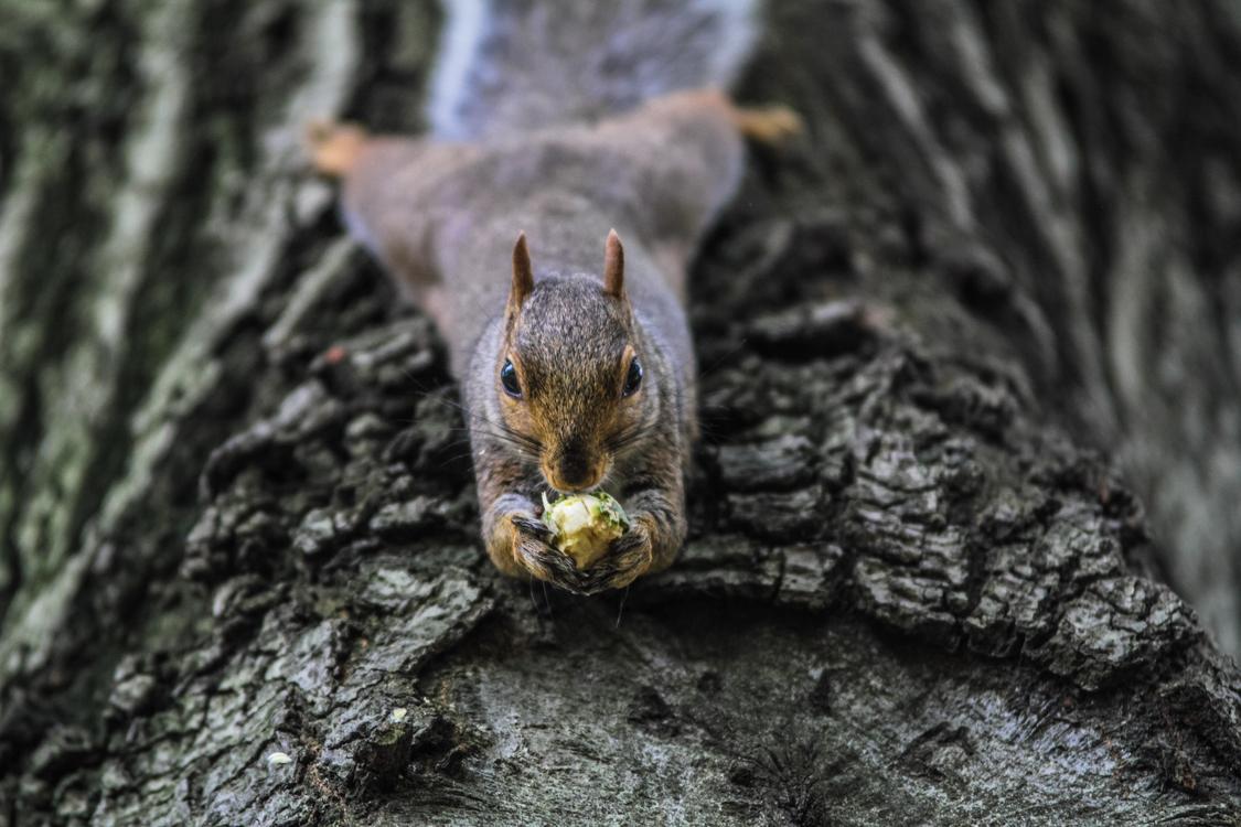Snout,Wildlife,Squirrel