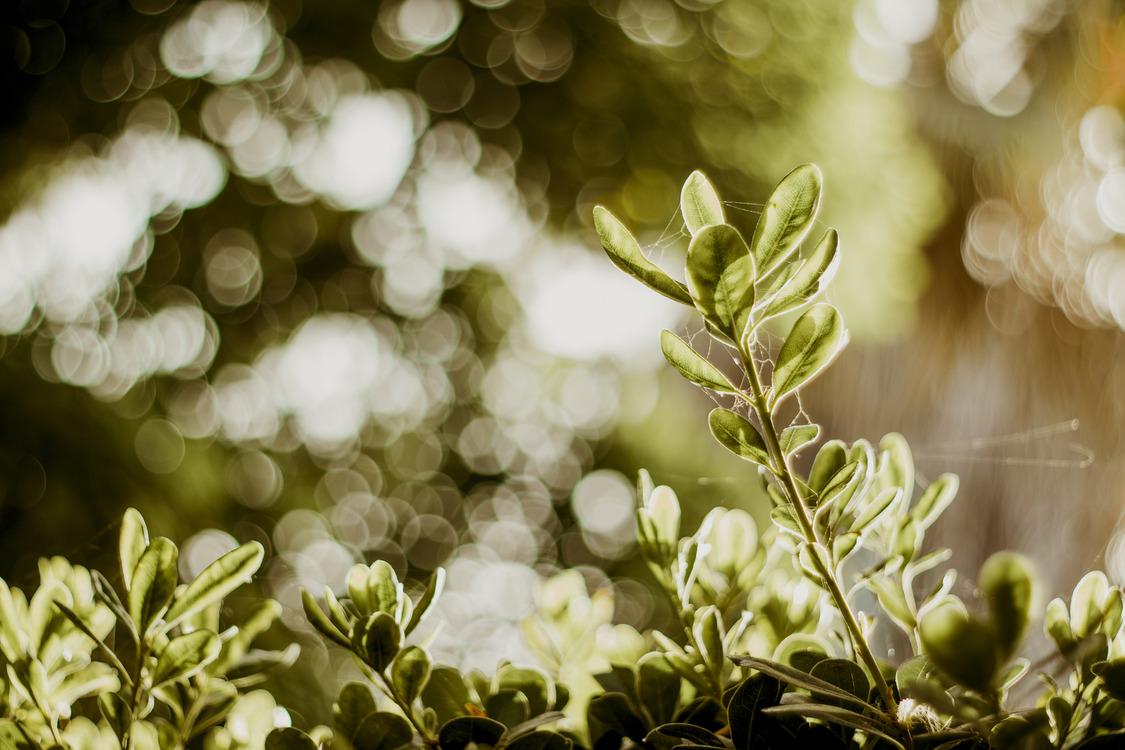 Plant,Leaf,Spring