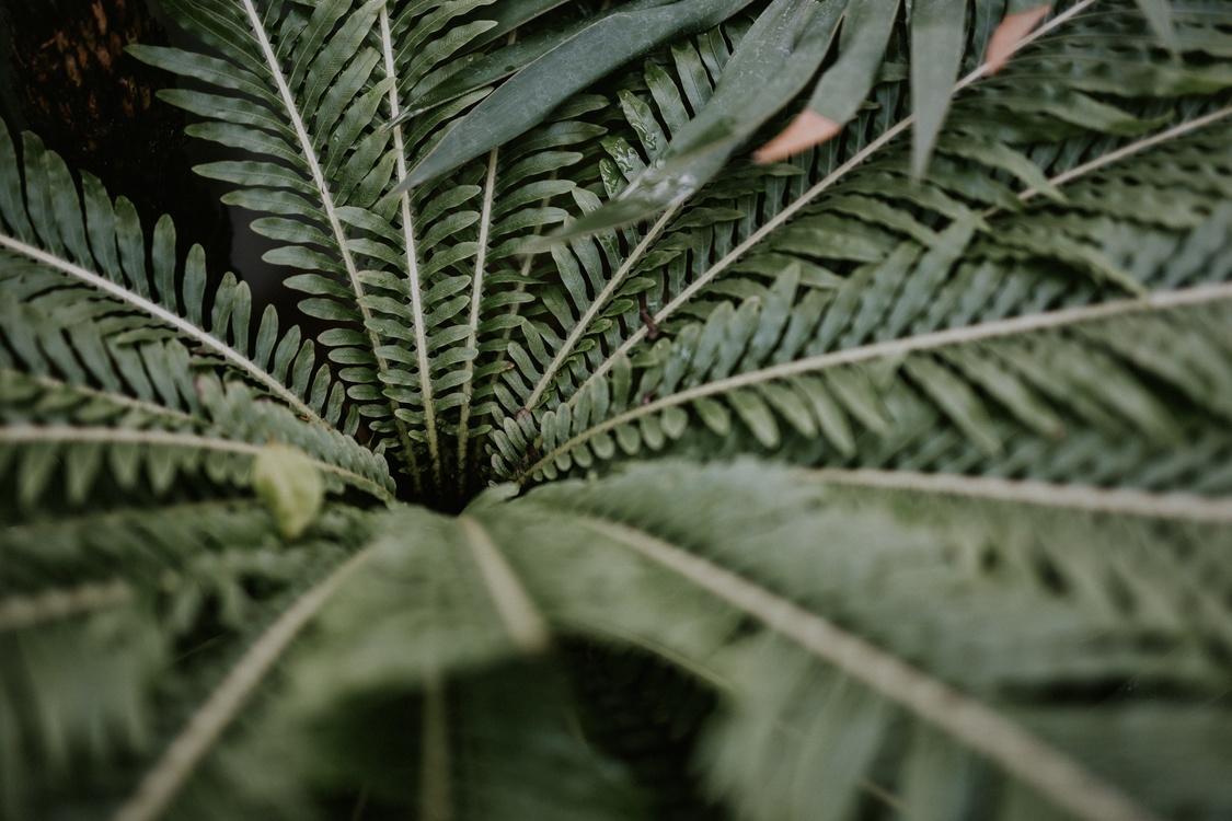 Plant,Leaf,Hemp Family