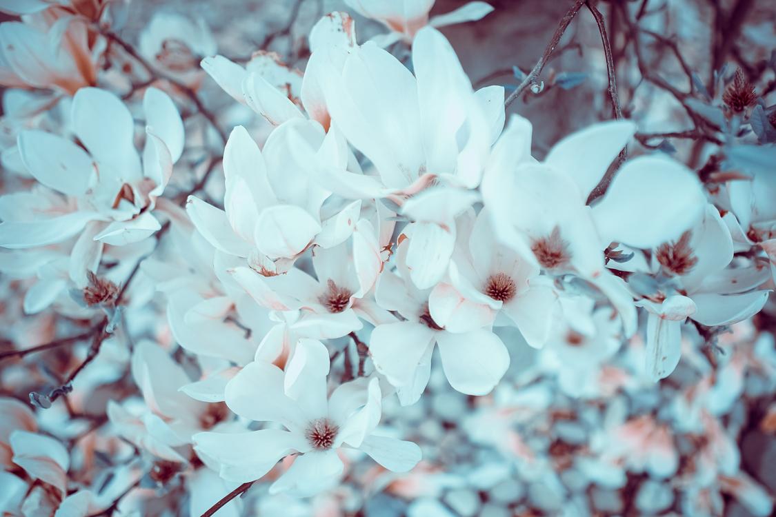 Plant,Flower,Winter