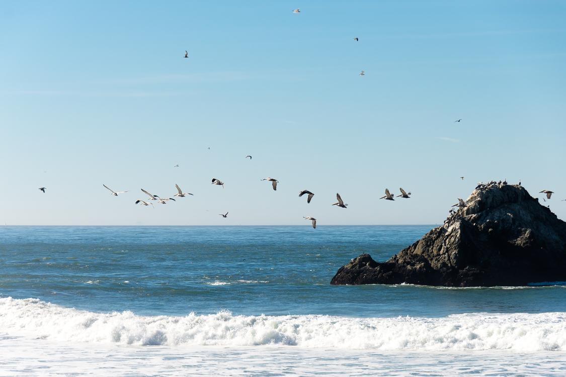 Wind Wave,Seabird,Horizon