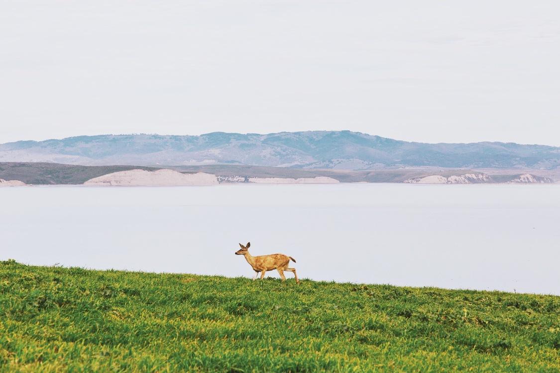 Meadow,Reservoir,Loch