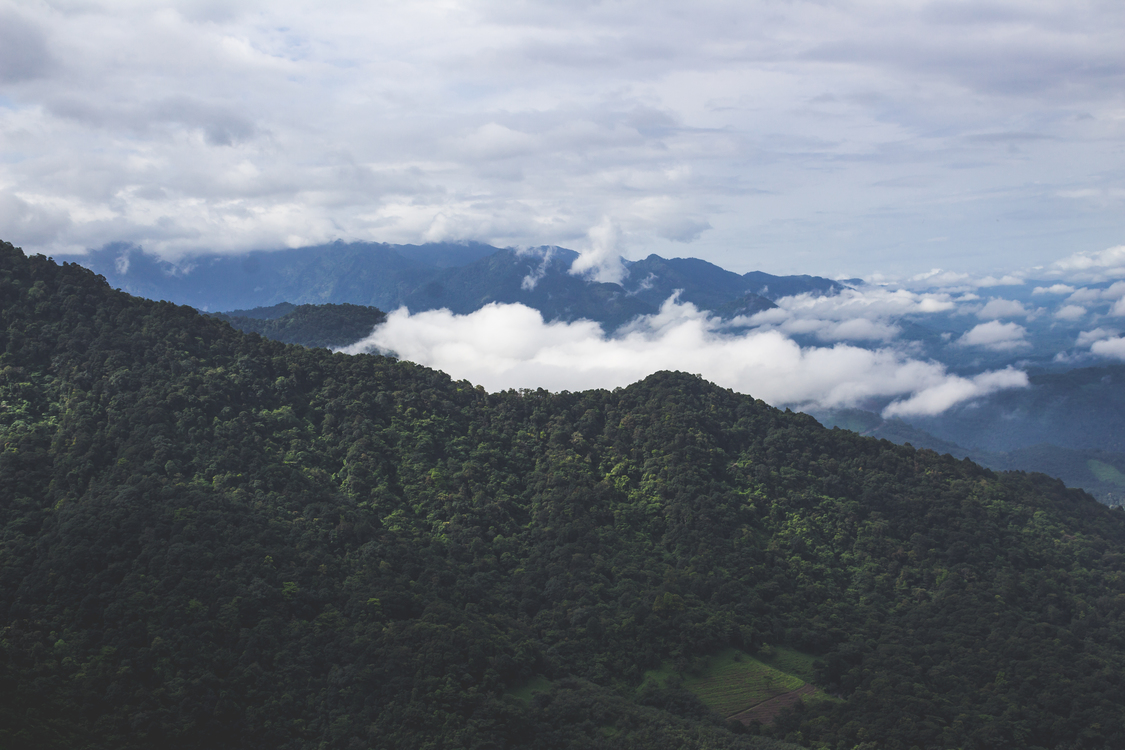 Forest,Massif,Terrain