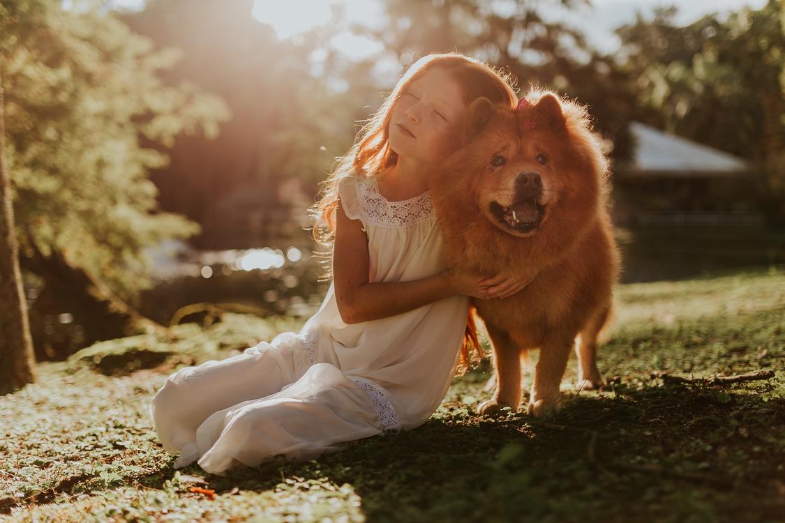 Companion Dog,Hug,Pomeranian