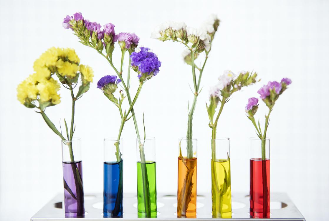 Plant,Flower,Artificial Flower