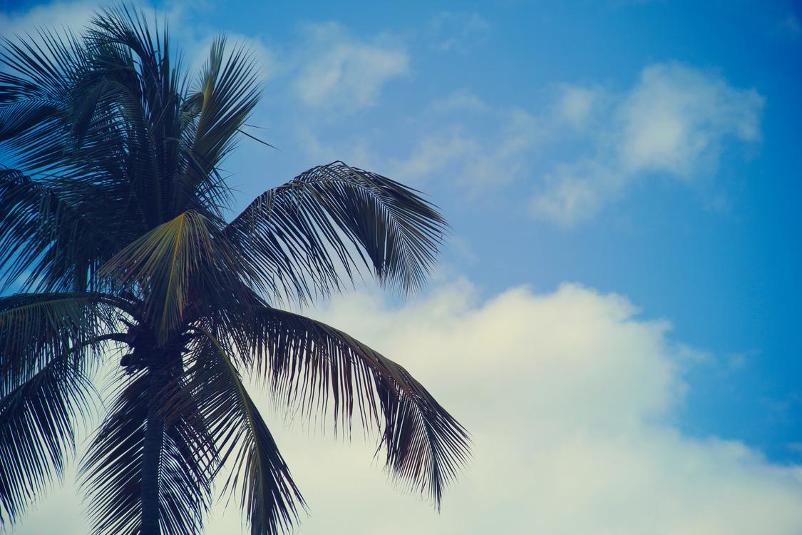 Plant,Leaf,Sky