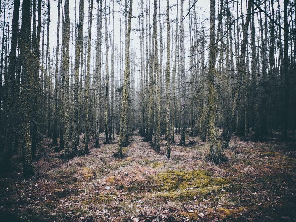 Biome,Sunlight,Wilderness