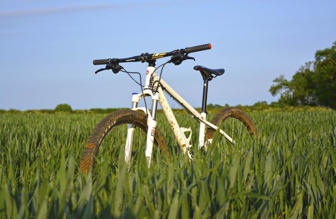 Bicycle,Meadow,Plant