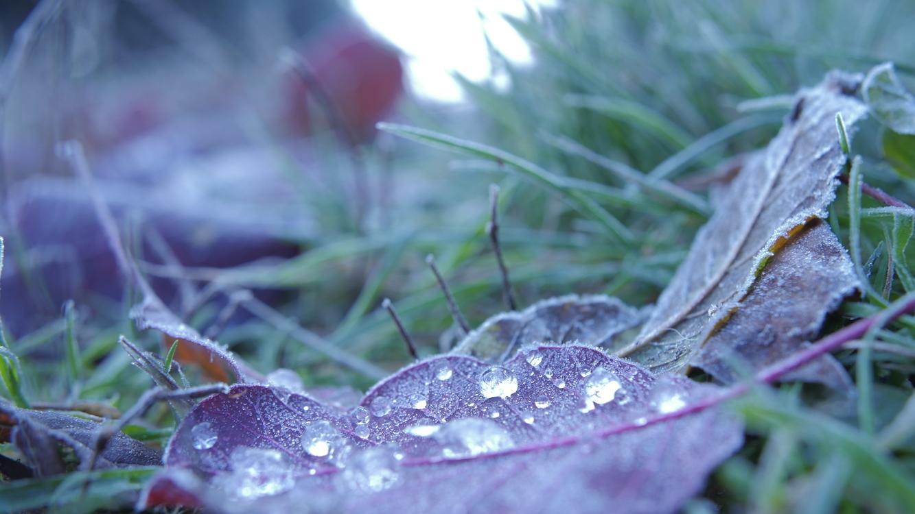 Plant,Leaf,Macro Photography