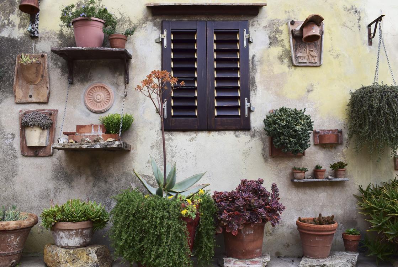 Plant,Flower,Garden