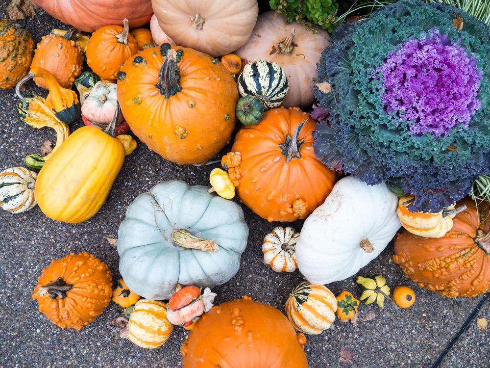 Vegetarian Food,Gourd Order,Gourd