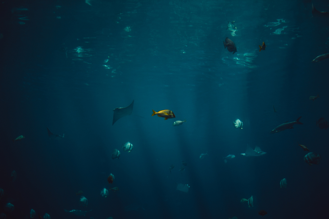 Underwater,Deep Sea Fish,Marine Biology