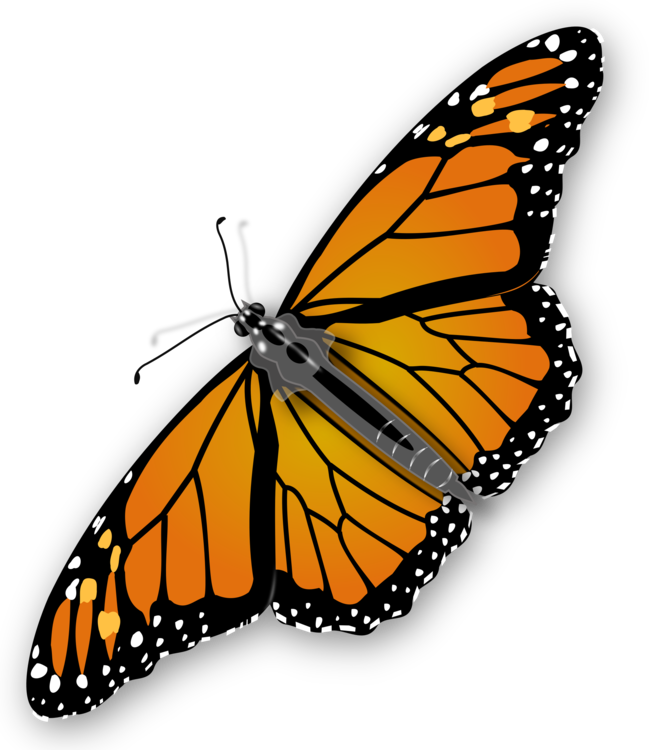 Butterfly,Pollinator,Insect