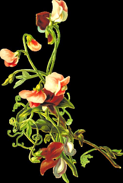 Plant,Flower,Art