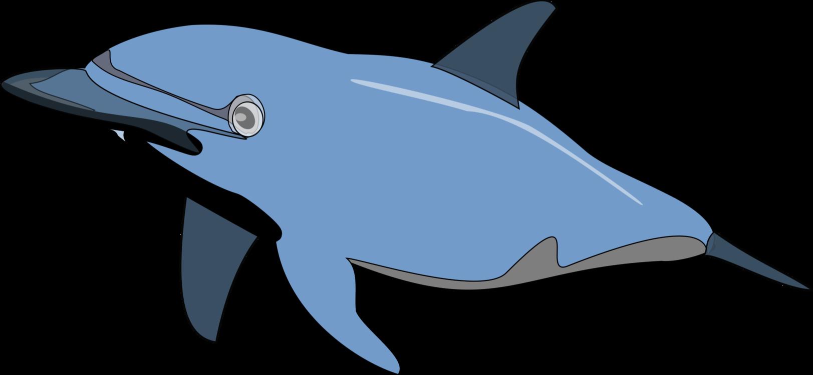 Shark,Fish,Dolphin